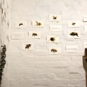 Visual Abstraction - 19 - Sophie Lewis - Bees